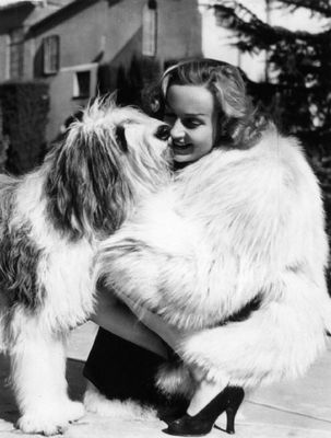 Reference:  http://www.carolelombard.org/gallery/albums/Animals/normal_lombard-sheep-dog.jpg